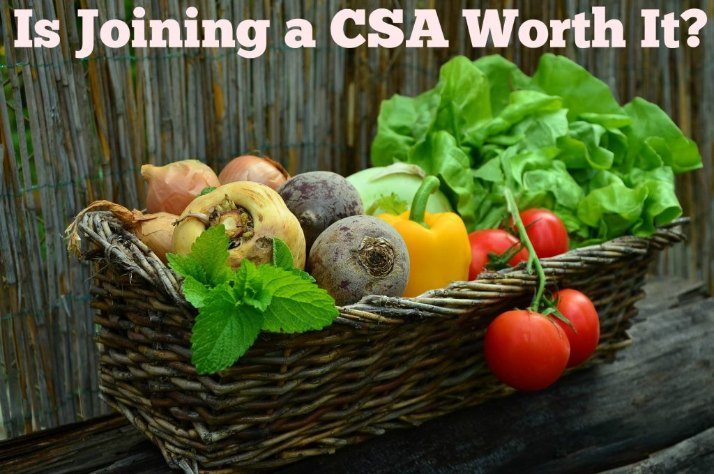 Is Joining a CSA Worth it? Community Supported Agriculture is a great way to provide your family with vegetables while supporting local farms.