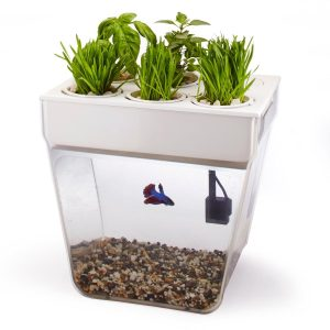 herb growing fish bowl